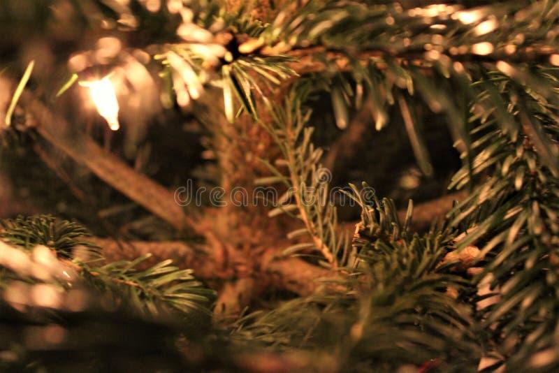 Árvore de Natal no calor da casa fotos de stock