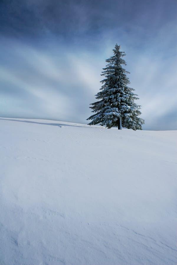 Árvore de Natal no inverno foto de stock royalty free
