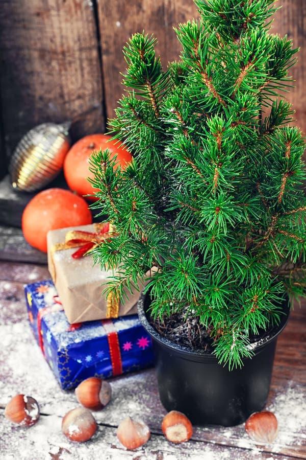 Árvore de Natal no potenciômetro fotos de stock royalty free