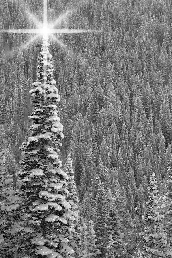 Árvore de Natal preto e branco fotografia de stock royalty free