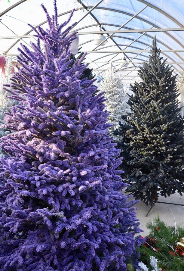 Árvore de Natal reunida roxa imagem de stock