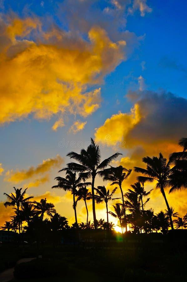 Download Por Do Sol Alaranjado Tropical Foto de Stock - Imagem de palma, ajuste: 29834926