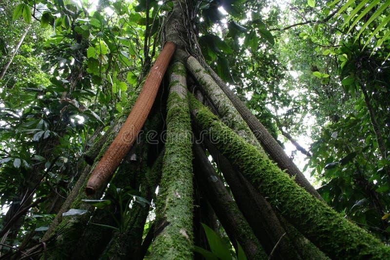 Árvore de passeio 2 fotografia de stock