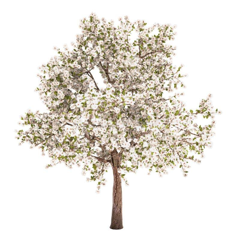 Árvore de pera isolada ilustração royalty free