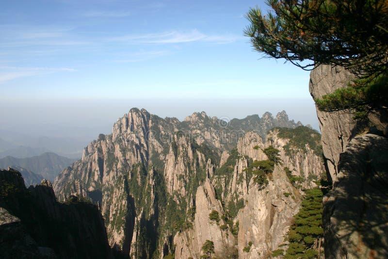 Árvore de pinho em montanhas foto de stock royalty free