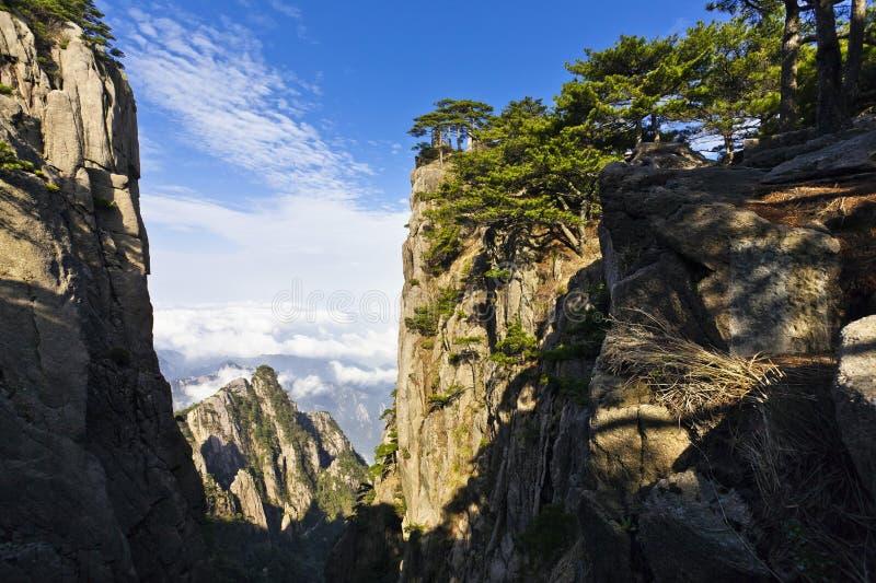 Árvore de pinho nas montanhas imagem de stock