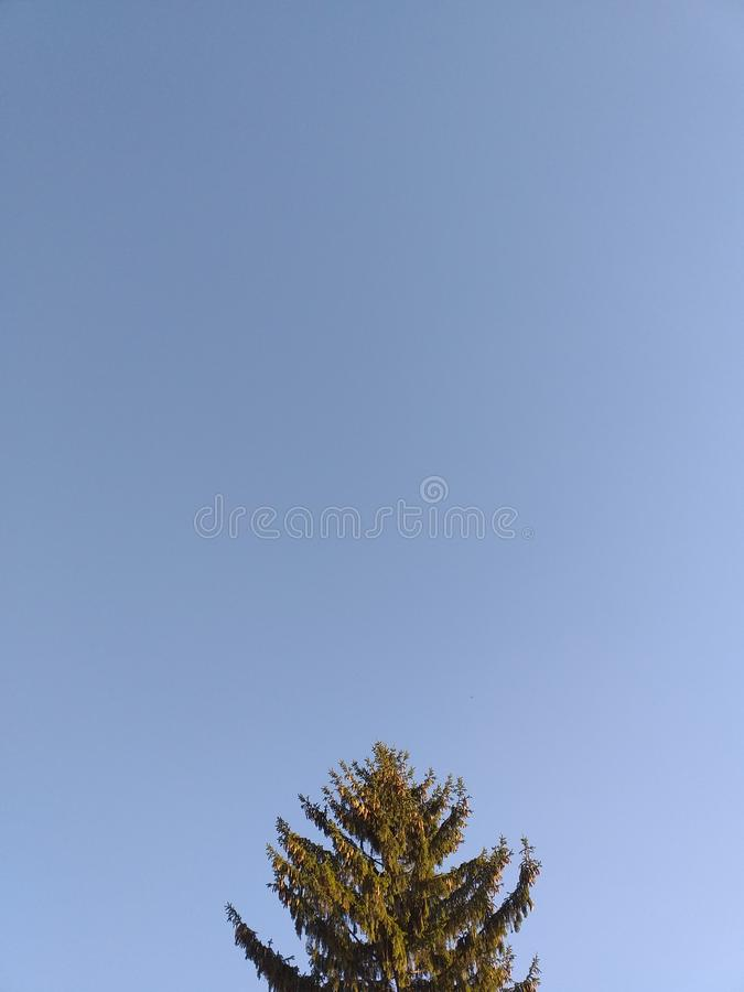 Árvore de pinho no céu? fotos de stock royalty free