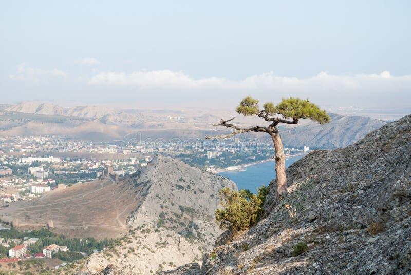 Árvore de pinho no penhasco imagens de stock royalty free