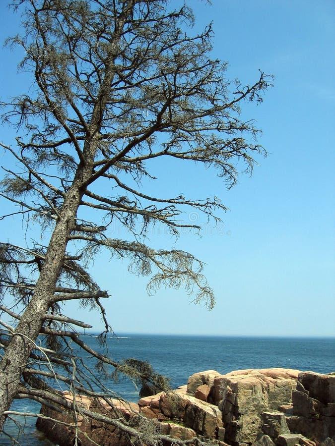 Árvore de pinho sobre o oceano fotos de stock