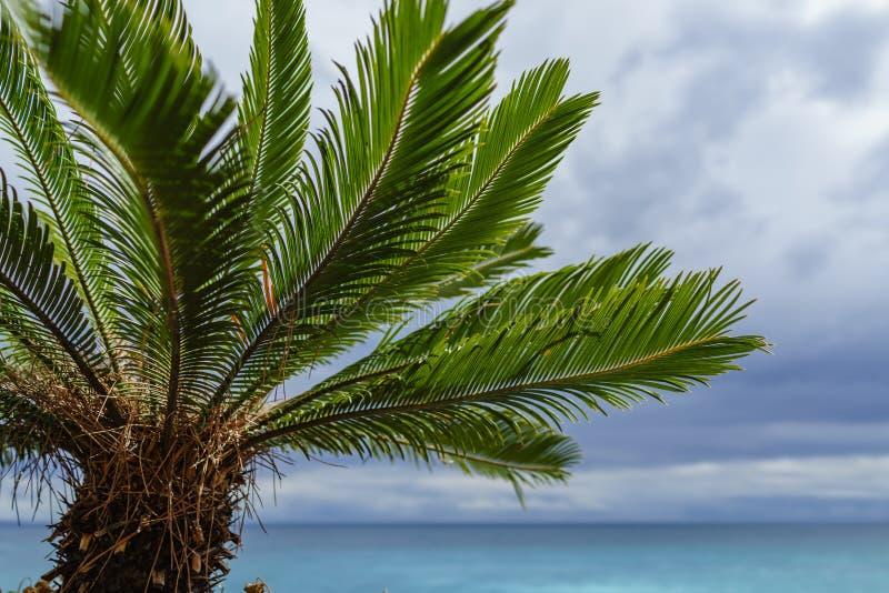 Árvore de Plam na frente do oceano azul foto de stock