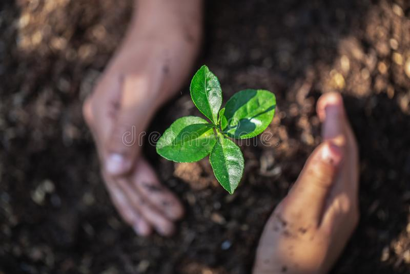 A árvore de proteção do rebento do trabalho da equipe das mãos da juventude que cresce acima e que planta na terra para para redu fotos de stock