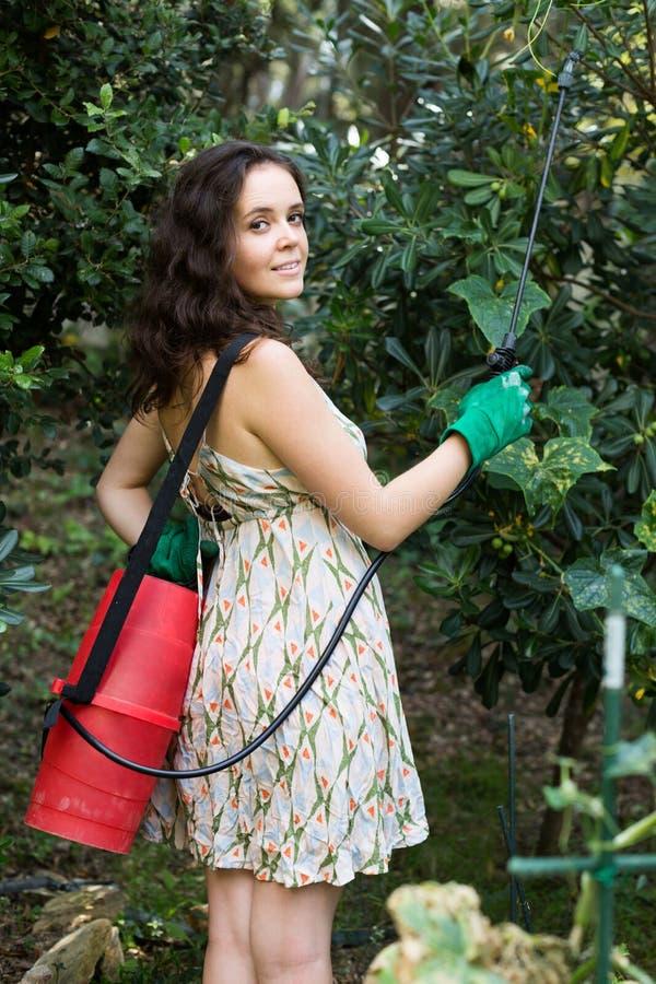 Árvore de pulverização da mulher no pomar imagem de stock
