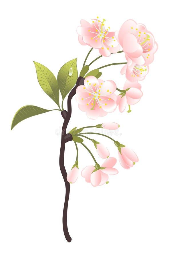 Árvore de Sakura ilustração do vetor