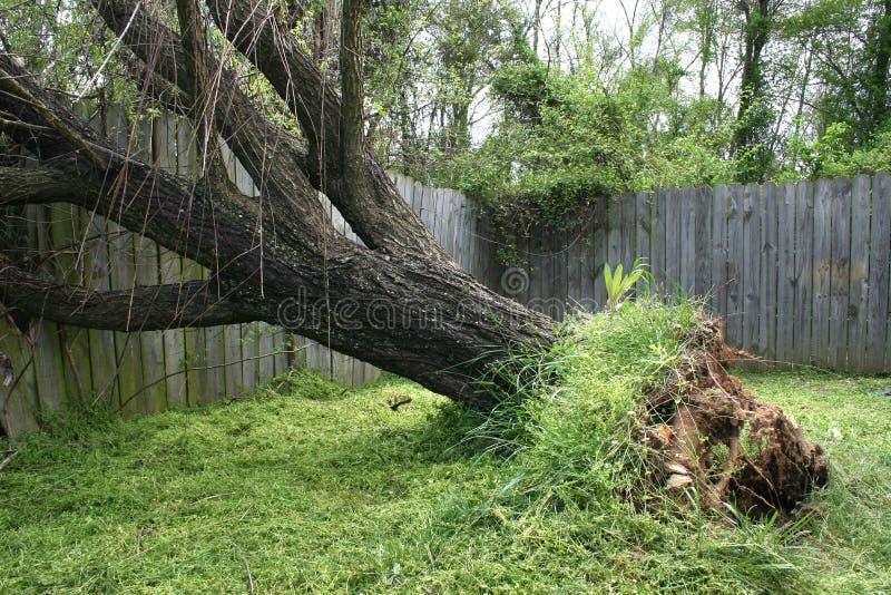 Download Árvore de salgueiro caída imagem de stock. Imagem de furacão - 105945