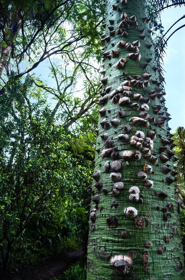 árvore de seda de floss imagem de stock