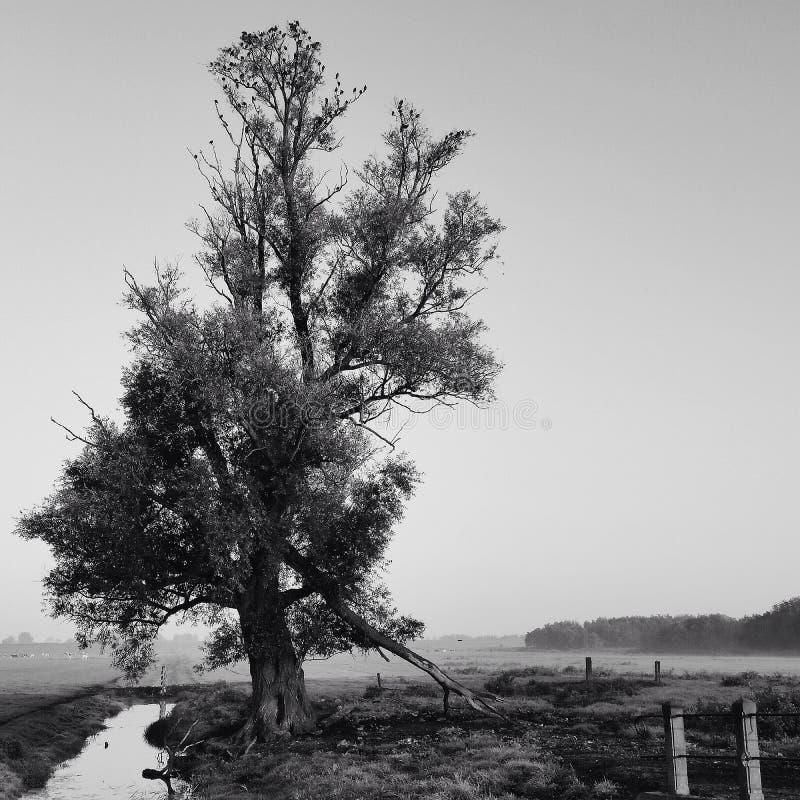 Árvore de solo foto de stock