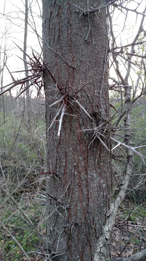 Árvore de Spikey foto de stock