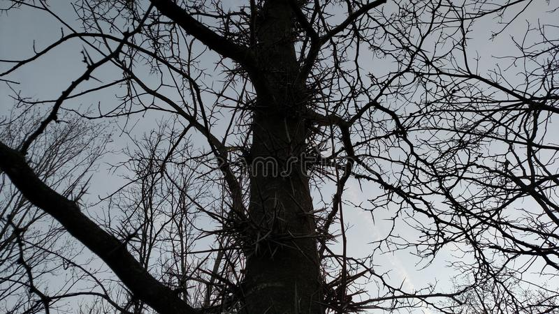 Árvore de Spikey foto de stock royalty free