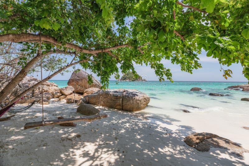 Árvore de suspensão do balanço de madeira na praia tropical imagem de stock royalty free