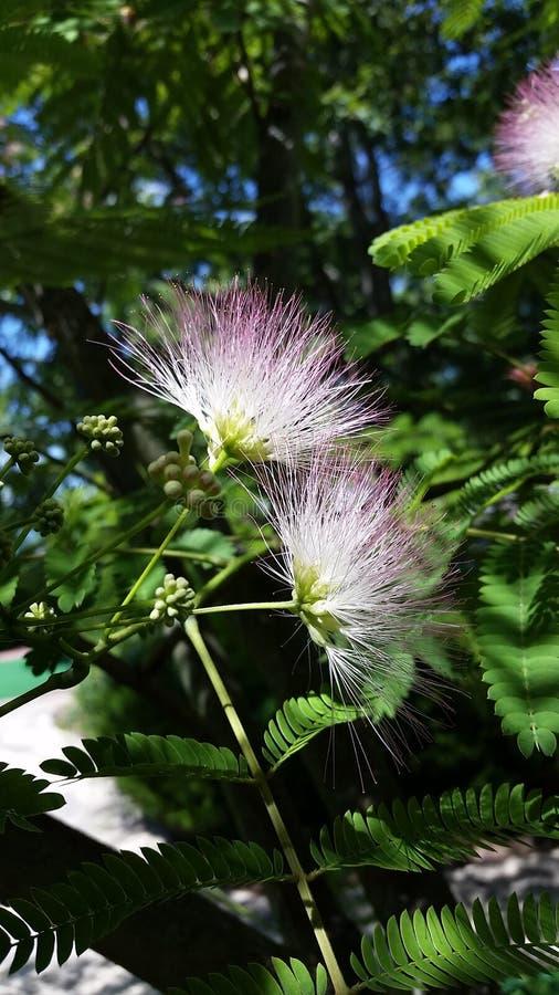 Árvore de Truffala imagem de stock royalty free