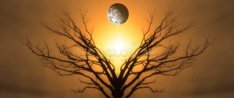 Árvore de vida imagens de stock royalty free