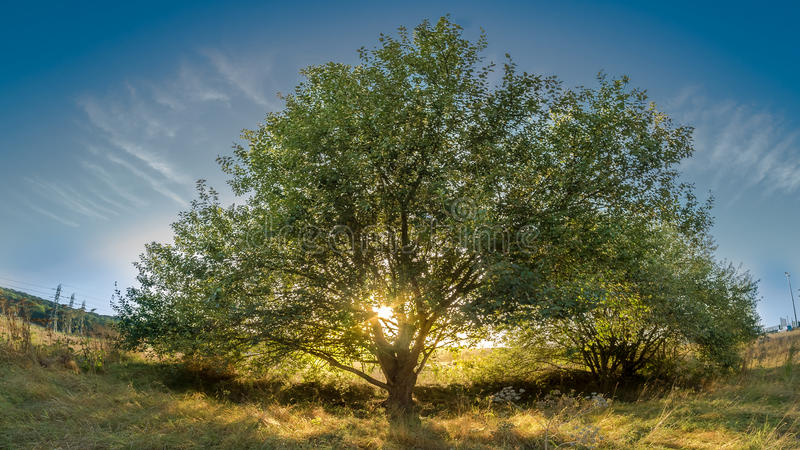 Árvore de vida foto de stock