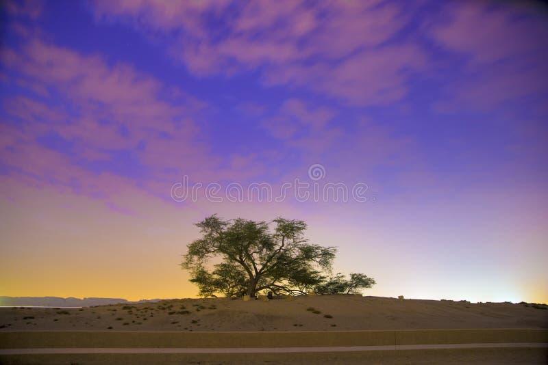 Árvore de vida no nascer do sol de Barém imagem de stock royalty free