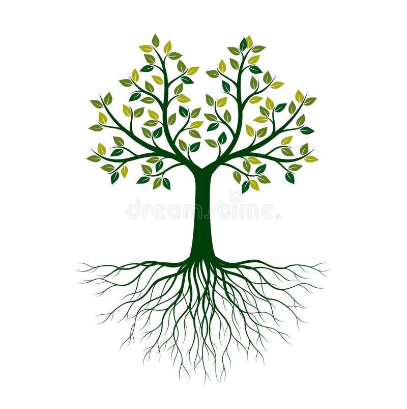 ?rvore de vida verde com raizes Ilustra??o do vetor ilustração royalty free