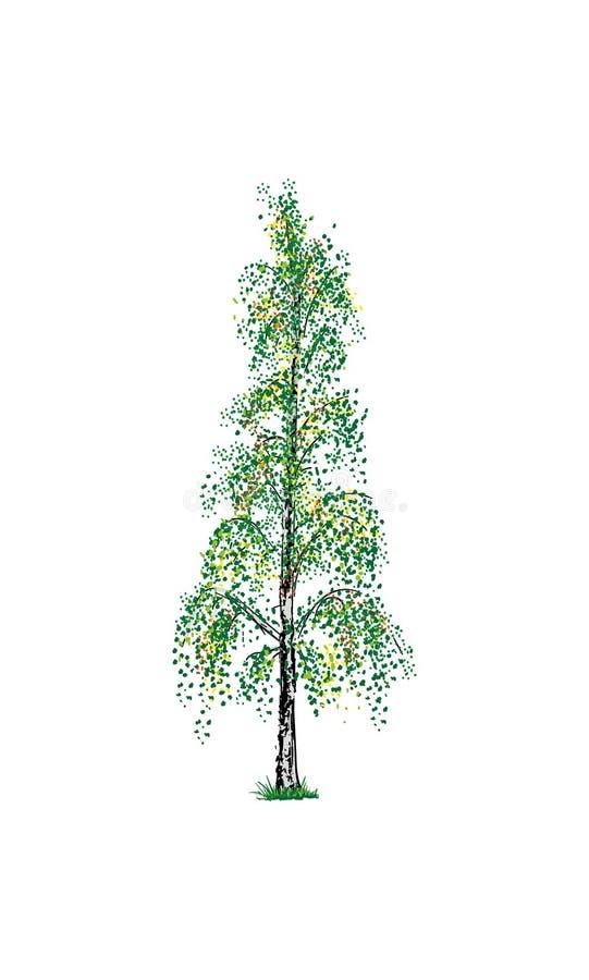 Árvore de vidoeiro ilustração royalty free