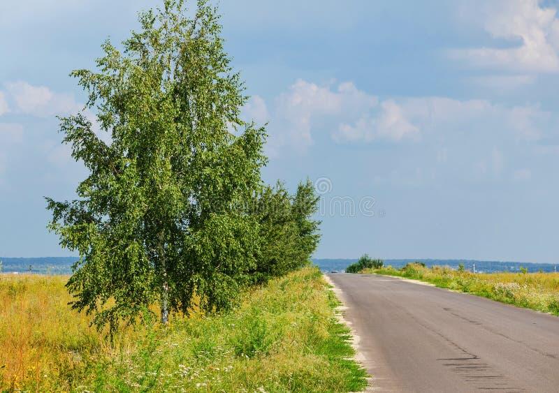Árvore de vidoeiro perto da estrada vazia rural imagens de stock royalty free