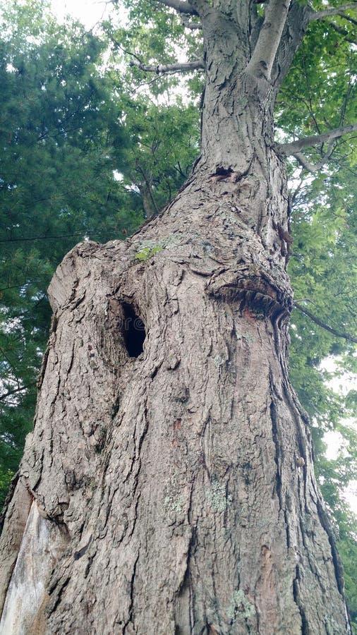Árvore de vista fresca imagens de stock
