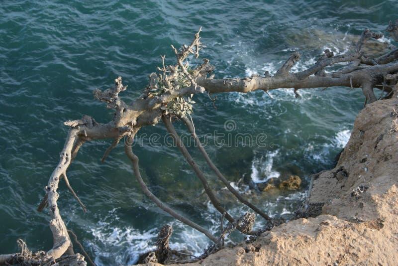 Árvore de voo sobre o oceano imagem de stock