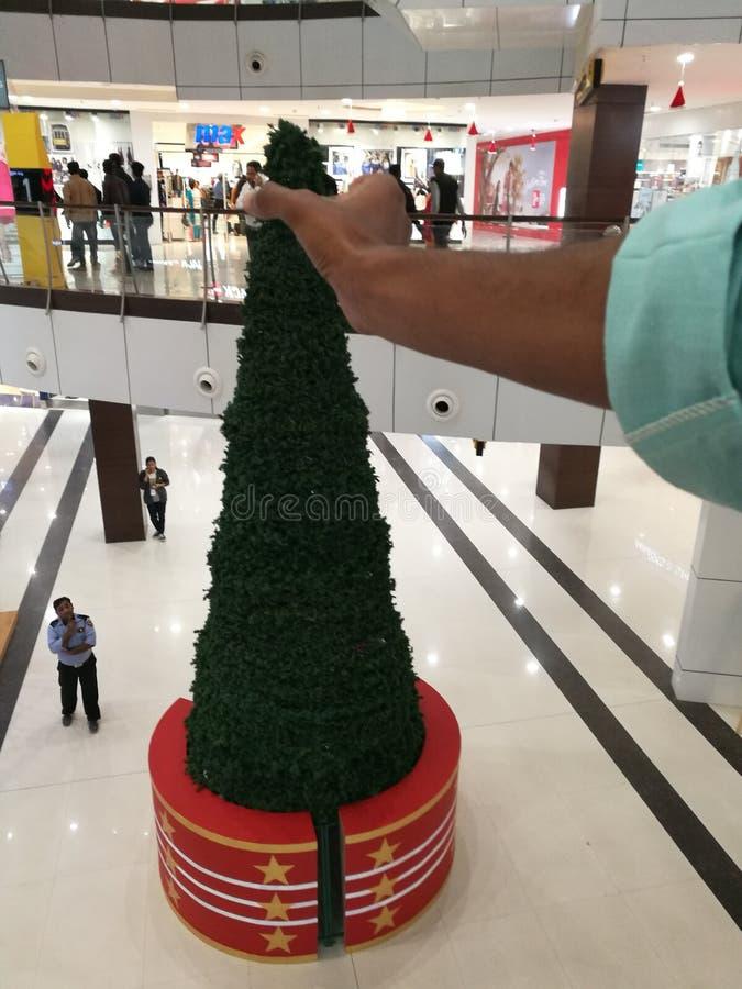 Árvore de Xismice da alameda do SI de Indore fotos de stock