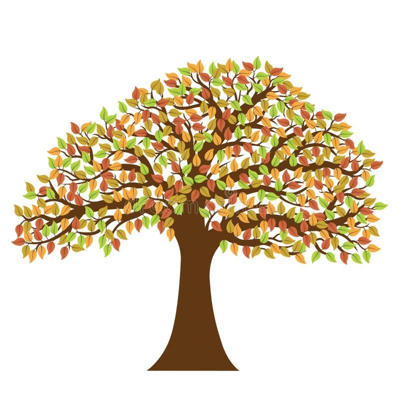 Árvore decíduo com as folhas de outono coloridas fotos de stock royalty free