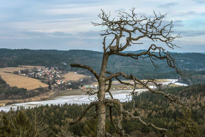 Árvore decíduo e neve na terra imagem de stock