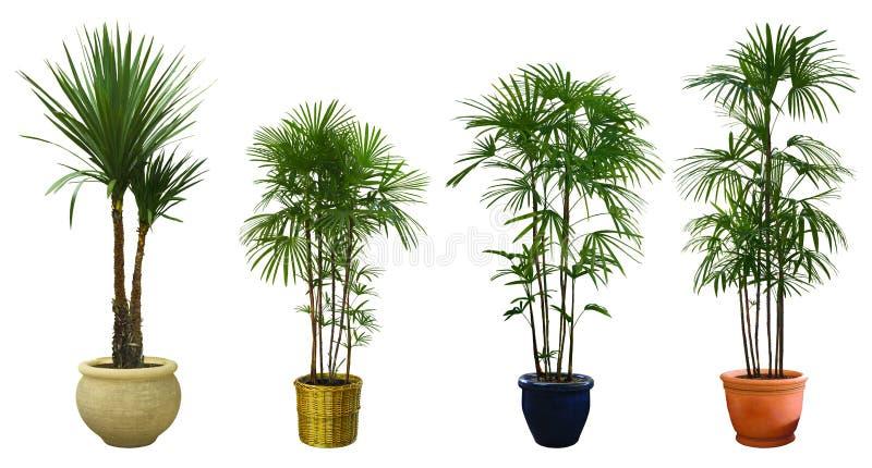 Árvore decorativa ajustada em um potenciômetro fotos de stock royalty free
