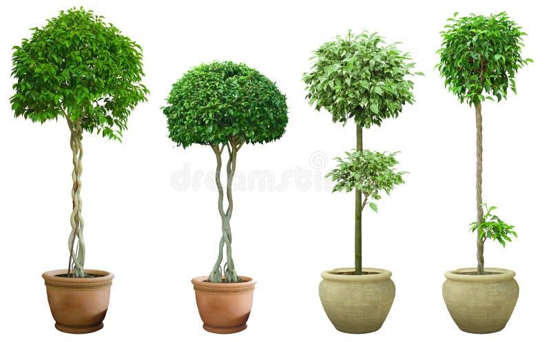 Árvore decorativa ajustada em um potenciômetro imagem de stock royalty free