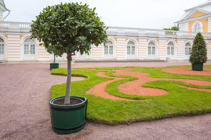 A árvore decorativa cresce no potenciômetro Parque europeu foto de stock royalty free