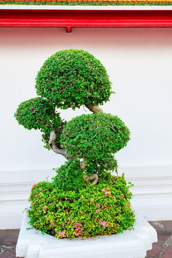 Árvore decorativa verde perto da parede branca imagem de stock royalty free