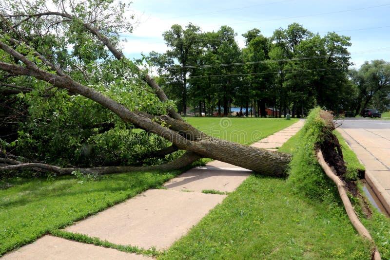 Árvore desarraigada caída sobre um passeio imagem de stock royalty free