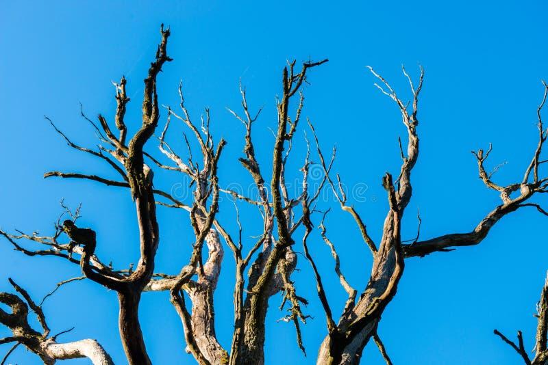 Árvore desencapada fotos de stock
