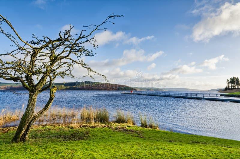 Árvore desencapada ao lado das reservas de água de Keilder imagens de stock