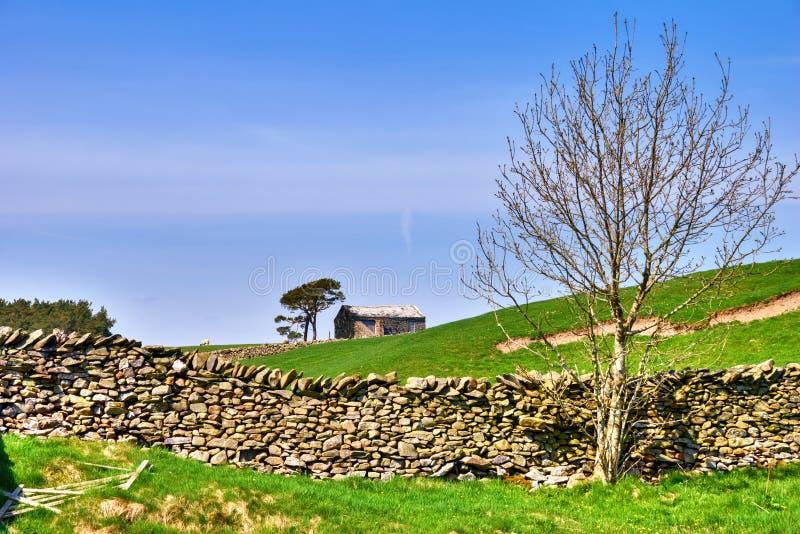 Árvore desencapada, celeiro, e parede de pedra seca. imagens de stock