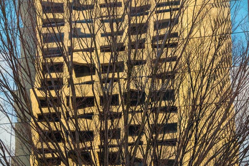 Árvore desencapada e reflexão da construção foto de stock royalty free