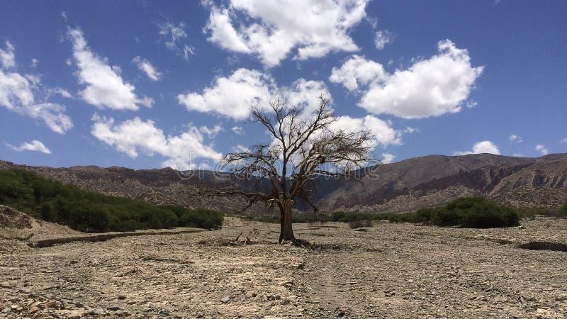 Árvore desencapada no meio da paisagem do deserto, Bolívia do sul imagem de stock