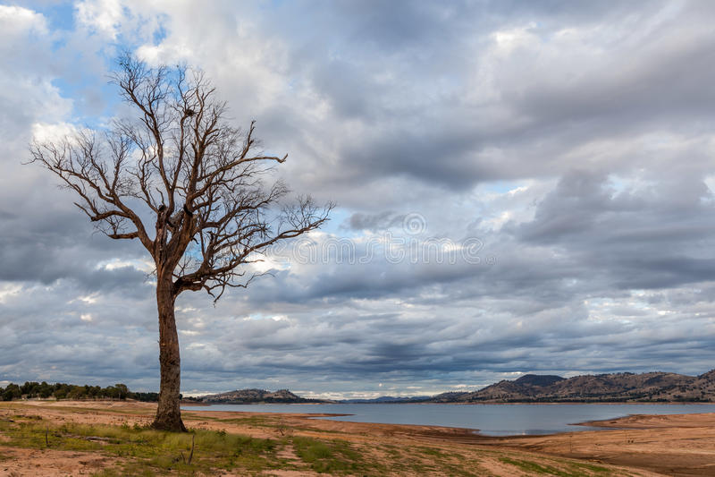 Árvore desencapada que está na costa de Hume Lake imagens de stock