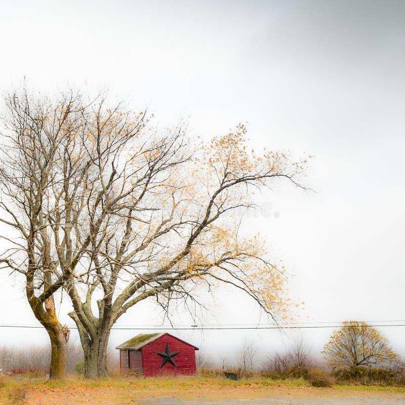 Árvore desencapada que pende sobre para fora a construção na mola adiantada foto de stock