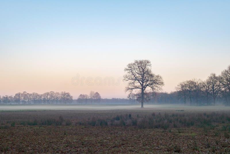 Árvore desencapada solitário no campo enevoado durante o inverno Reserva natural fotografia de stock
