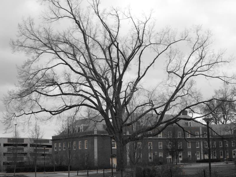 Árvore desencapada velha fotos de stock royalty free