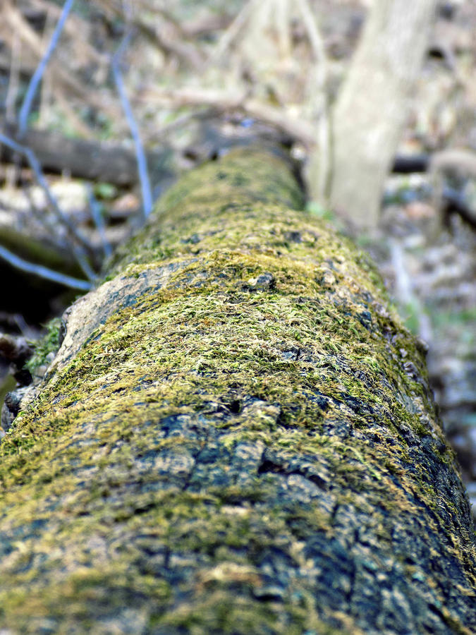 Árvore desmoronada coberta no musgo foto de stock